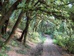 private jogging trail