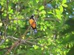 birdwatching paradise