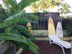 Back yard fruits  and banana trees.
