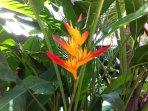 L'Oasis de Terre Rouge - Appartement Acacias - Fleurs