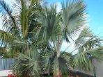 L'Oasis de Terre Rouge - Appartement Acacias - Palmiers