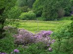 View behind cabin in June - beautiful rhododendrons