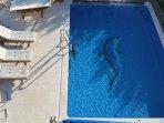 schwimmingpoll