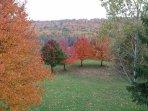 Fall foliage in back yard.