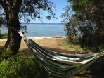 Hammock hangs between two beautiful Banksia trees looking out to the Lake.