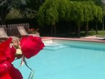 Pool and roses