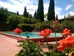 Pool, flowers and cypress
