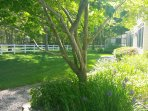 Portion of the front yard, there is over an acre to the camera's left. and more than 2 acres behind!