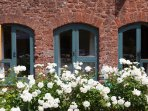 Our gorgeous white roses!