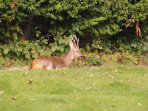 Wild deer and boars are in the forest of Cerisy and can be seen and heard drive with care