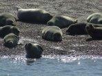 Visit the seals at Blakeney