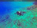 Perhaps go diving...