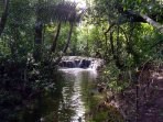 A jungle trail along the creek - just for you
