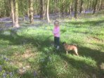 Enjoy great walks in the surrounding bluebell woods at springtime.