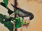 Our colibry