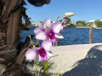 Backyard Orchid