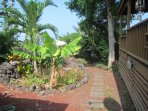 Follow path past pineapples, banana trees and turmeric to a stairway to the beach.