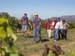 Visites de vignobles et dégustations de vins dans les caves et coopératives.