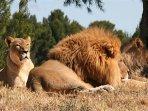 La réserve de Sigean Antilopes, lions, Chimpanzés, Éléphants, Reptiles, . à 35mn