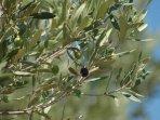 Visitez l'oliveraie papillon et sa fabrique d'huile olive, savons,...