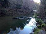 Peaceful morning creekside