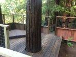 Tree adorned hot tub on deck