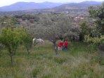 Jardín trasero con desbrozadoras 'ecológicas'