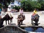 Donkey tours of Beycik