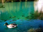 Usual animals to see in the National Park are ducks and fishes.