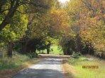 Cottage road - avenue of honour of oak trees