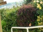 lovely private garden  full of birds