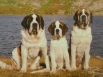 The St Bernard museum and kennel is approx. 30 mins drive away.