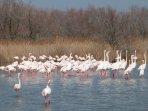 Parc ornithologique de Pont de Gau aux Saintes Marie de la Mer