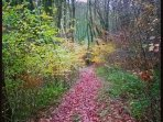 Part of our 12 acre woodlands which provide wonderful walks