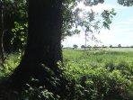 Adjacent field to the farm.