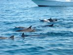 We can arrange a swim with wild dolphins Large numbers visit this stretch of coast every morning