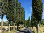 Cypress trees line the lanes leading into the village of Montefoscoli