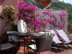 Bougainvillea bushes on the terrace
