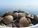 Scallop Season is off to a bang in Steinhatchee FL!  So many, so little time!!! Hurry and book today