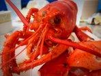 Award winning Maine Lobsters
