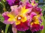 Homegrown organic orchids