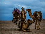 Camp in Morocco Camel Ride