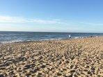 Den Haag heeft vele mooie stranden