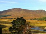 Strathspey in the Cairngorms, Inverness-shire, Scotland