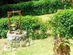 Cottage Hibiscus, the garden