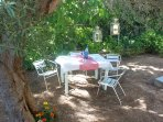 our garden surrounded by rich vegetation