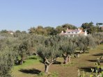 Villa Stauder and private olive grove with 220 olive and fruit trees