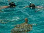 Take a catamaran cruise and swim with turtles.
