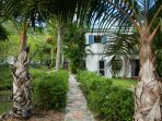 Stone path guarded by arching palms leads to the front door