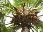 Fruit trees on site - we will gladly open a coconut for you to enjoy